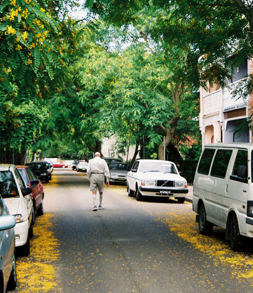 http://www.walksydneystreets.net/photos/double-bay-jacaranda-yellow-e.jpg