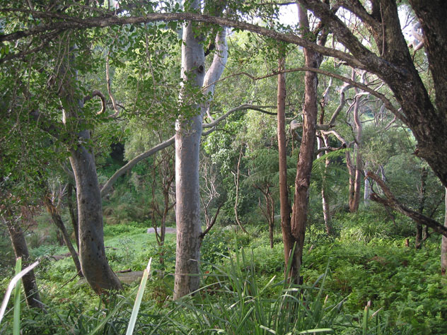 neutral-bay-bushland-n.jpg