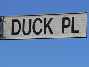 street-themes-birds-duck-kbrd.jpg