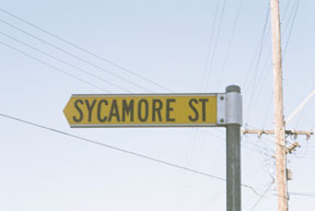 street-themes-trees-sycamore-ktre.jpg